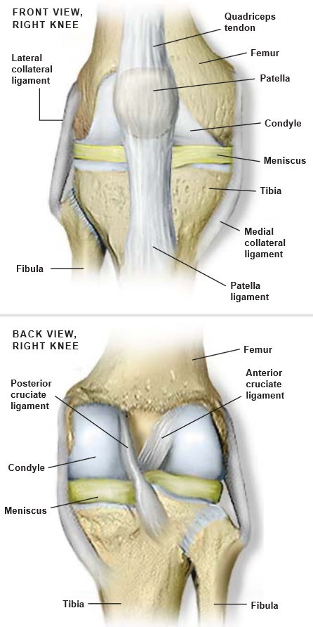Images of knee anatomy